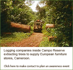 Logging Companies inside Campo Reserve extracting trees to supply European furniture stores